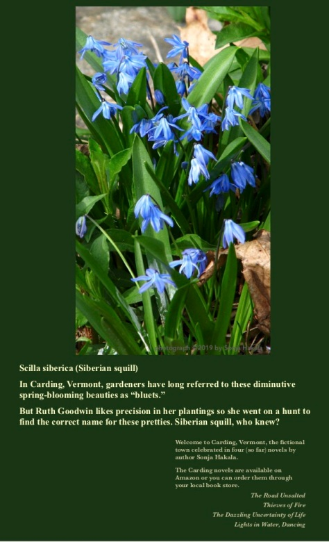 SH-Siberian squill