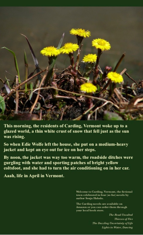SH-Coltsfoot