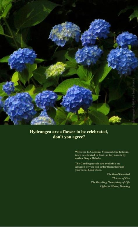 SH-Hydrangea