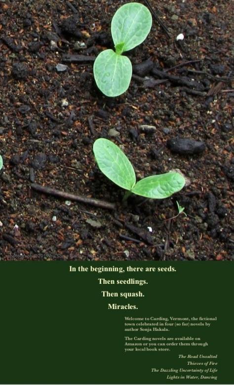 SH-Seedlings