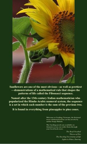 SH-Sunflowers 2
