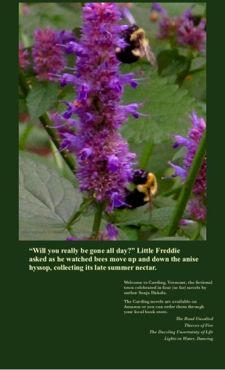Bees on anise hyssop