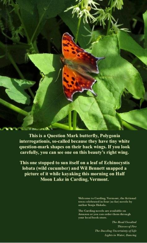 SH-Orange butterfly