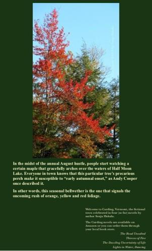 SH-Red maple tree