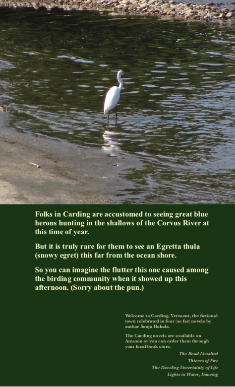SH-Snowy egret