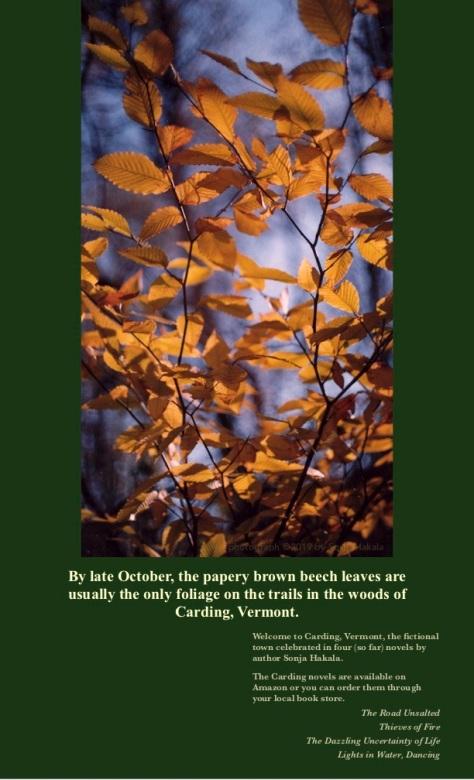 SH-Beech leaves