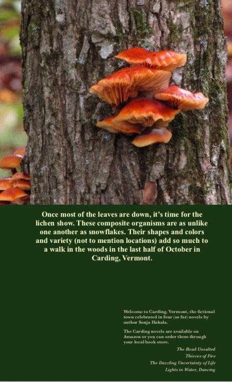 SH-Orange lichen