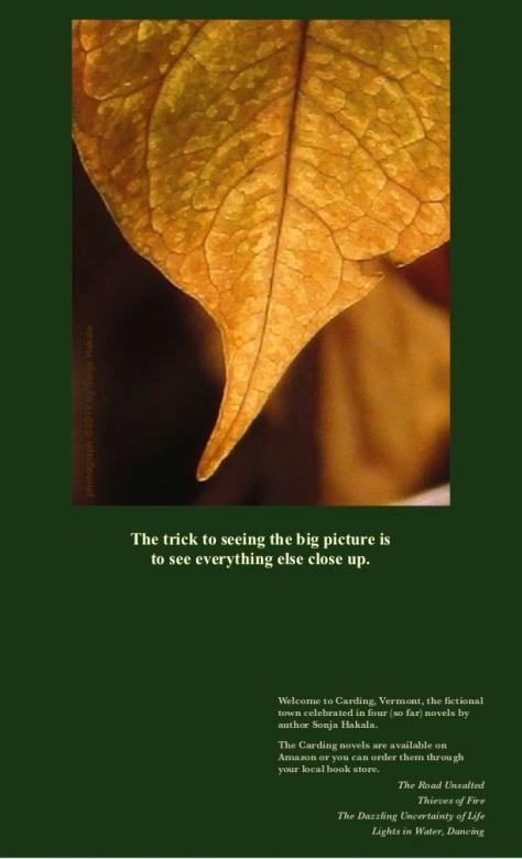 SH-Knotweed leaf-veins