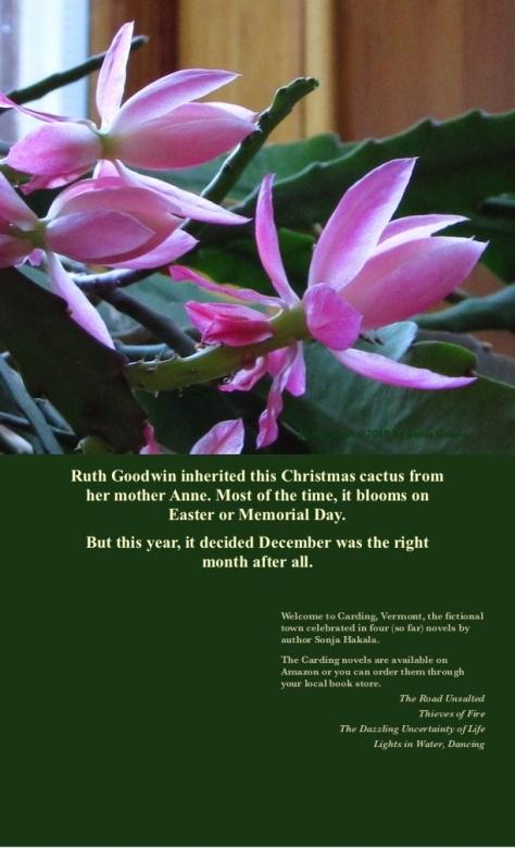 SH-Pink Christmas cactus