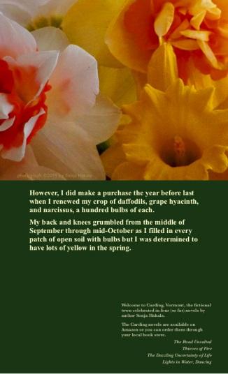 SH-Daffodils