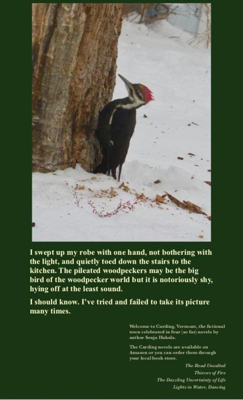 SH-Pileated woodpecker