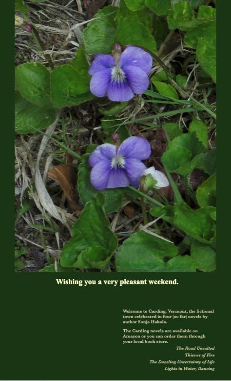 SH-Blue violets